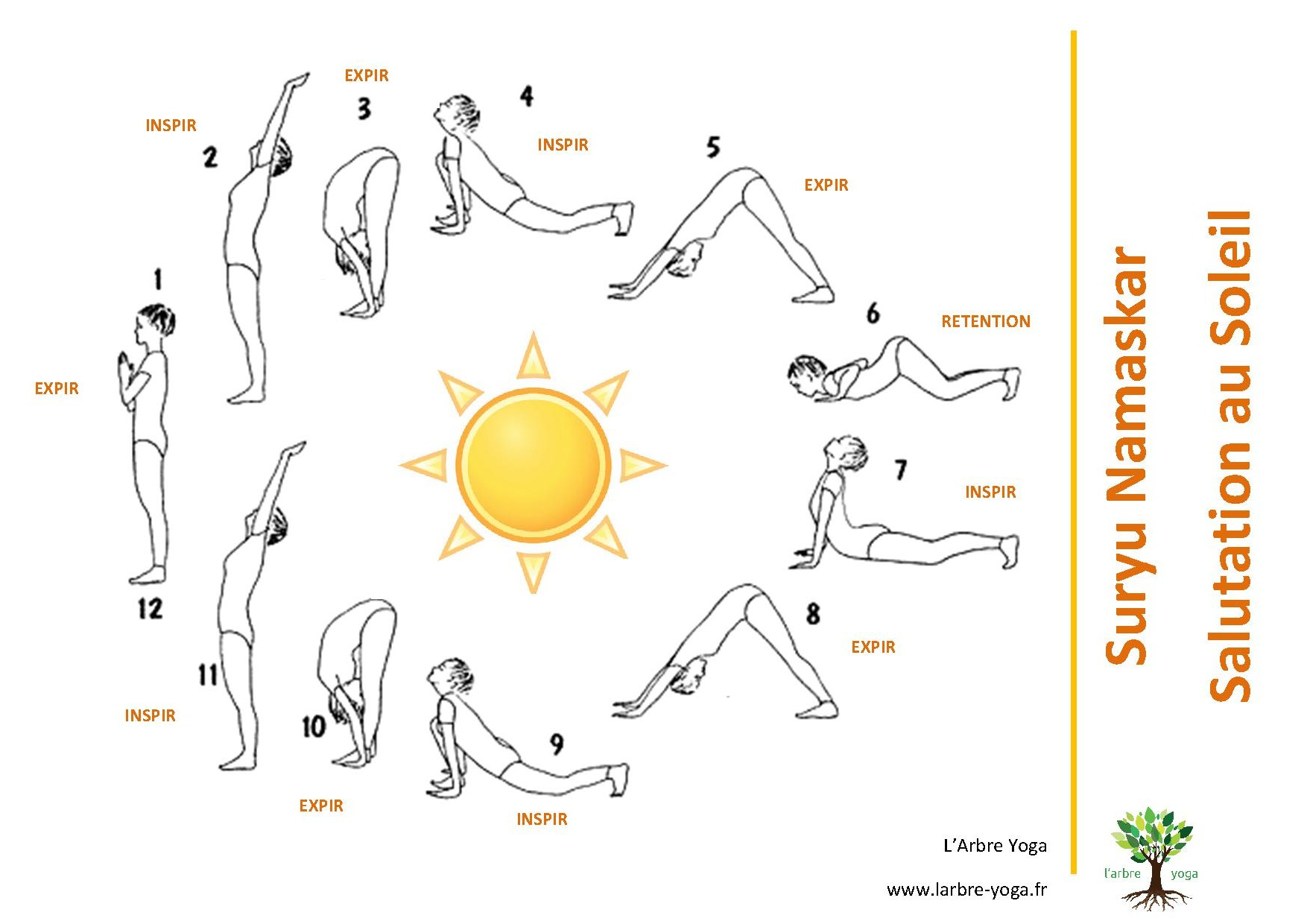 surya namaskar cycle