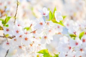 mobilisez l'énergie du printemps