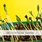 Méditation SWAN - L'Arbre Yoga - La Rochelle